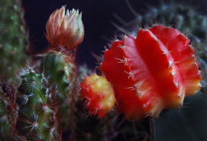 Cactus 8 Larry Singer Nature Photograph