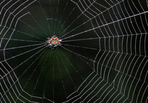 Crabby Spider Bonnet House Larry Singer Nature Photography