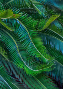 Fabulous Fronds Bonnet House Larry Singer Nature Photography